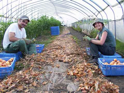Participants in the WWOOF Japan program harvesting.