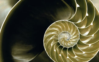 The golden ratio, shown as a sea shell.