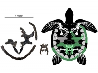 New species of ancient sea turtle unearthed in Alabama