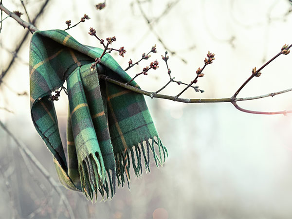Scarf wrapped around a tree branch.