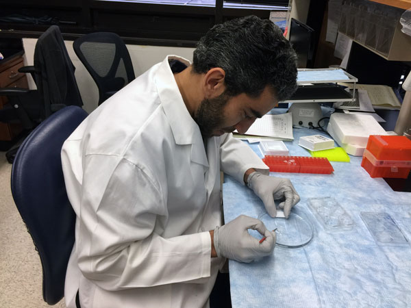 Hisham Abdelmotilib doing research in a lab.