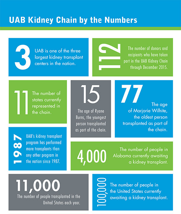 12 2015 UPDATE By the Numbers Kidney Chain 600px2