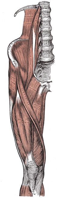 MSK lower extremity