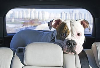 mcgwin pets in cars s