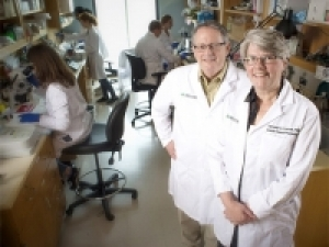 Pollock labs awarded more than $11 million to study renal control of sodium and salt balance