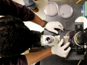 New UAB undergraduate degree programs in genetics, genomic sciences and immunology now enrolling