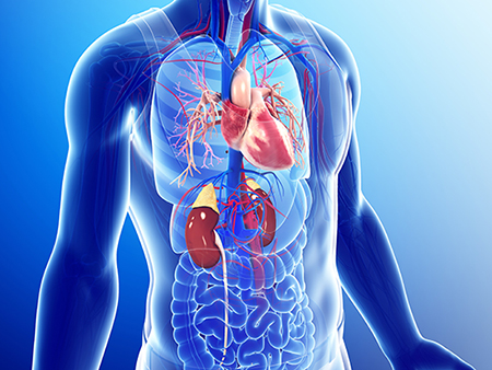Link between chronic kidney disease and heart failure is ...