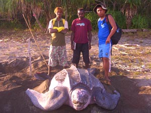 Leatherbacks_Beach_Tapilatu_s