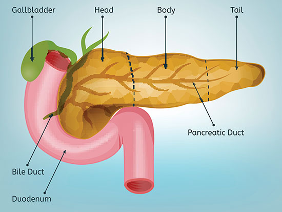 pancreas stream
