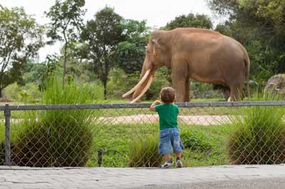 elephants s