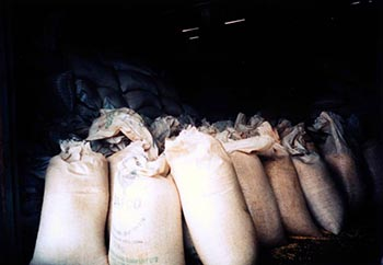 In developing countries, food stored in piles of sacks in warehouses is often contaminated with fungi that give off toxic substances