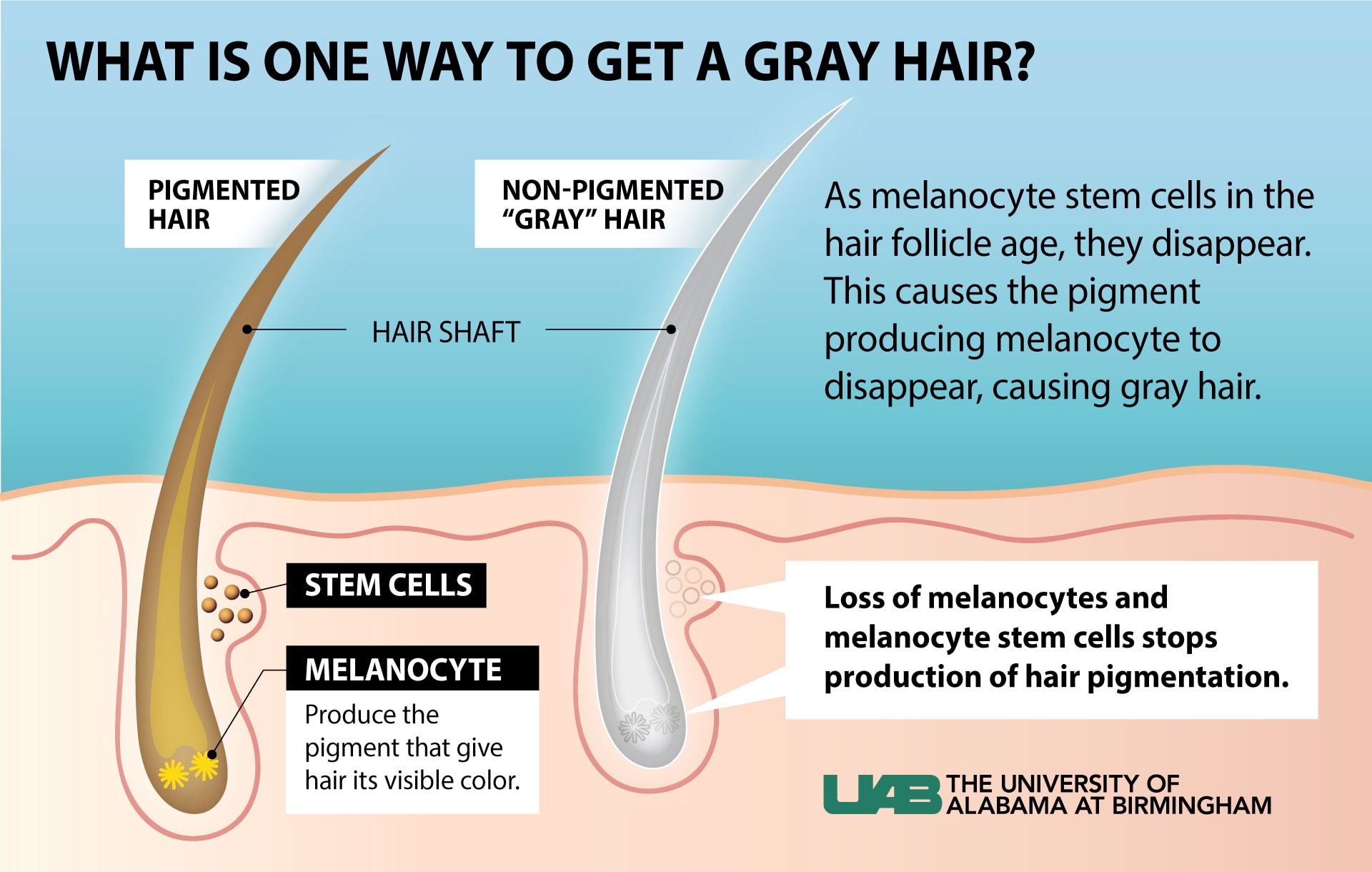 gray hair graphic