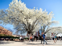 UAB campus honored for commitment to conservation