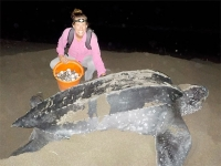 Graduate student continues endangered sea turtle research with new grant