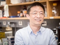 New pathway to differentiation found, shedding light on some cancers