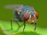 Human brain protein associated with autism confers abnormal behavior in fruit flies
