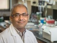 Rheumatoid arthritis: seeking an answer, cell by cell