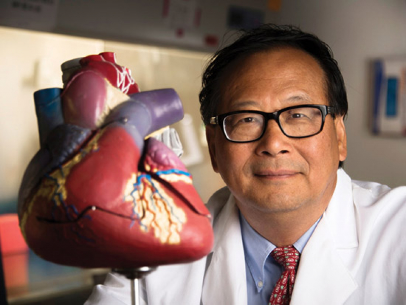 Slow release of two chemicals protects the heart after experimental heart attacks