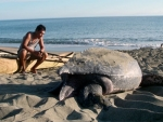 Grant awarded to UAB alumnus to continue research on Pacific leatherback sea turtle