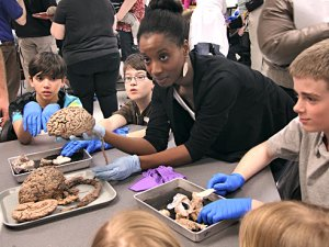 Neuroscientists spread love of science at McWane during Brain Awareness Week