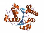 Tugs and pulls: How a molecular motor untangles protein