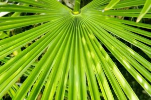Saw palmetto not effective for urinary issues in men with BPH