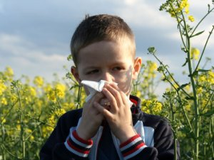 Protect against the haze of hay fever