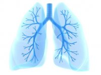 New imaging method facilitates research into cystic fibrosis and other pulmonary diseases