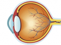 Changes in the eye might predict onset of frontotemporal dementia