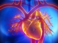 Risk of fatal heart disease higher among black men, women