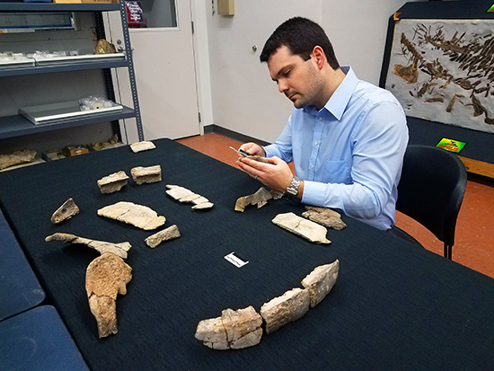 75 million-year-old sea turtle fossil discovery is a new genus and species that sheds light on the evolution of its modern relatives