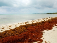 Marine biologist to explore life cycle diversity in red seaweed