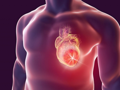 Linking heart attack damage with spleen, kidney, an integrated approach to heart failure
