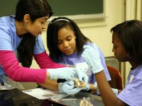 Girls in Science and Engineering Day inspires young women to excel in math, science