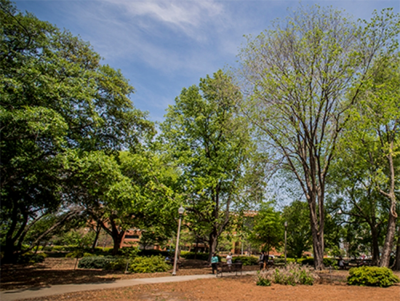 UAB recognized for preserving tree growth, prioritizing green spaces on campus