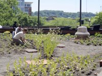 HUC green roof features fresh herbs for your dining pleasure