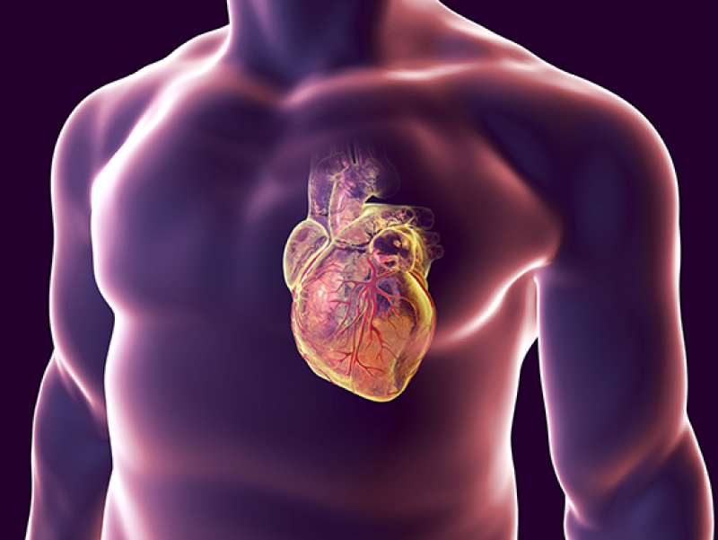 A simple method to improve heart-attack repair using stem cell-derived heart muscle cells