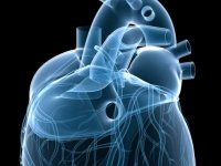 Beta-blockers can cut mitral disease effects, consequences