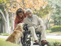 Animal-assisted therapy aids in spinal cord injury recovery
