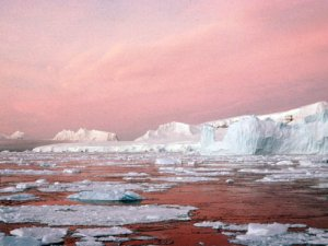 Antarctic marine ecosystems damaged by human activities