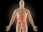 Immune cells that create and sustain chronic inflammatory bowel disease identified