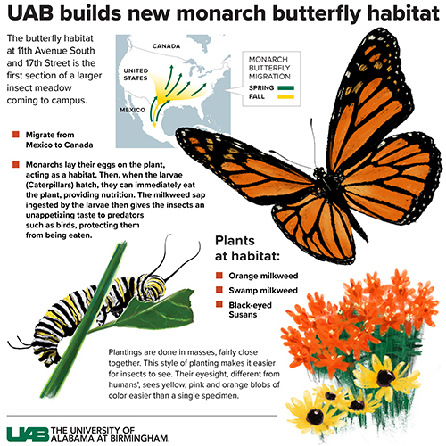 Monarch Butterfly Habitat infographic 500