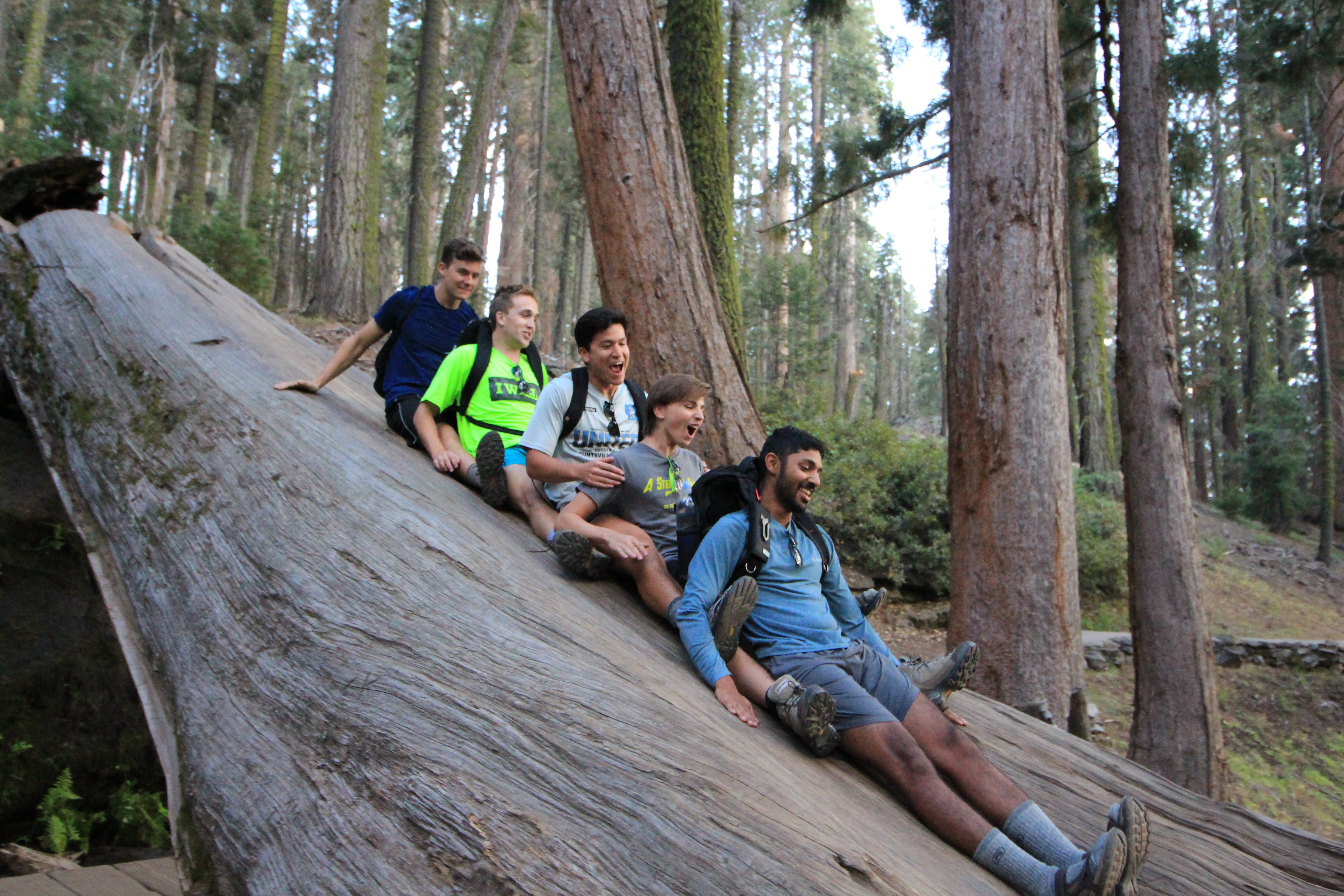 16Hiking On The Congress Trail And Playing On A Fallen Sequoia Tree Sequoiadendron Giganteum Near General Sherman