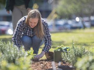 Pollinator garden puts the 'bee' in UAB