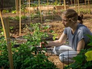 Employees, students grow their own fruits and vegetables in UAB Gardens