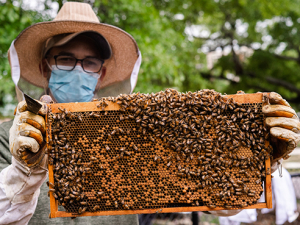 New beehive at UAB Gardens means more pollinators on campus