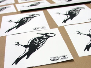 Barrett uses graphic design to help save endangered woodpeckers