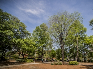 UAB again honored as Tree Campus USA