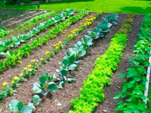 Grow your own fruits and vegetables in UAB Gardens