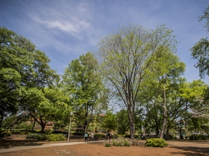 Enjoy a visit to UAB's most treasured trees